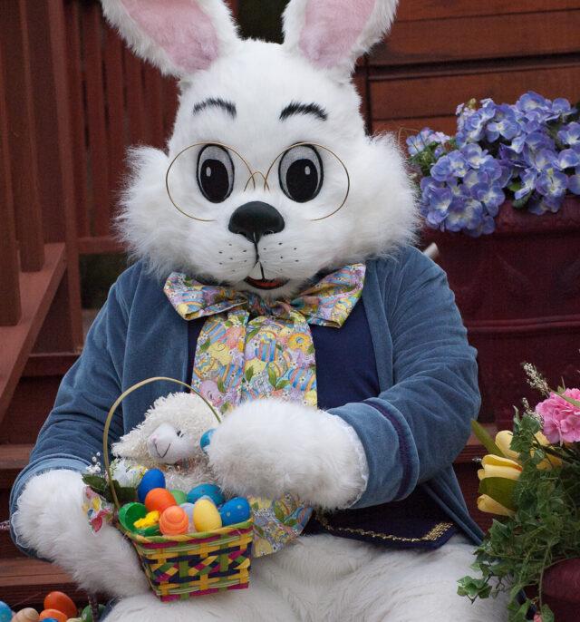 Bunnybasket 1