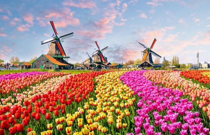 Hollandse Avond Adobe Stock 137139944