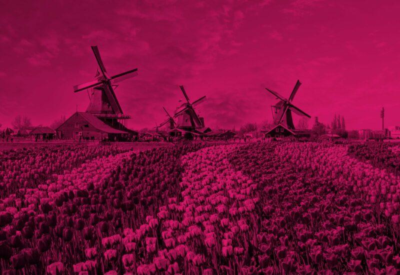 Hollandse Avond Roze